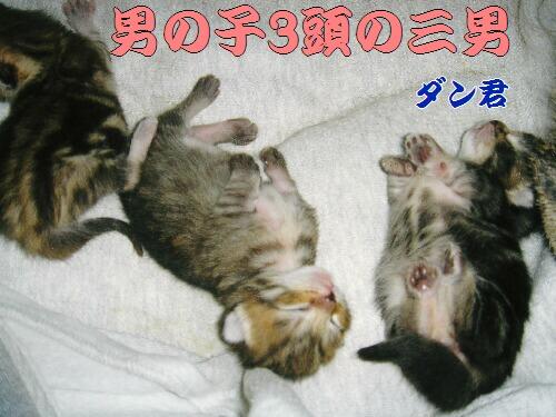 2006年02月11日_DSC00618.jpg NO.jpg
