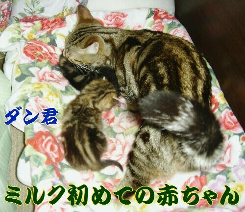 2006年02月22日_DSC00664.JPG NO1.jpg