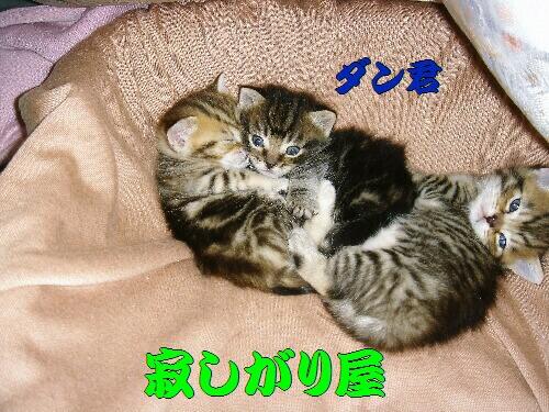 2006年02月28日_DSC00702.JPG NO3.jpg