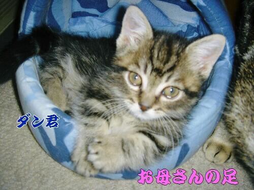 2006年04月05日_DSC00878.JPG NO5.jpg