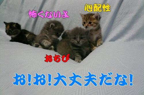 P1050344.JPG新.jpg