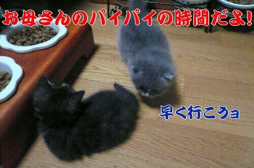P1050839.JPG sin.jpg 6.jpg