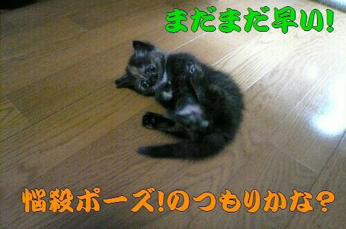 P1050849.JPG sin.jpg 3.jpg